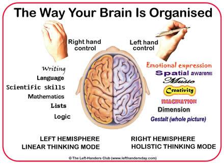 ambidextrous-brain