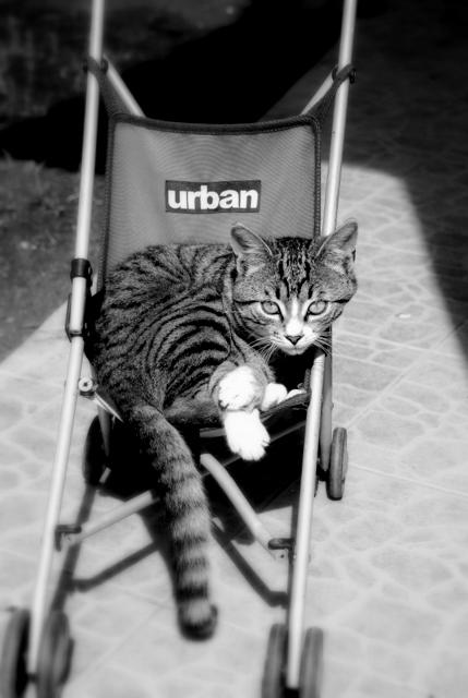urban-002